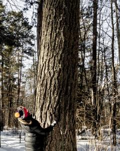Lost40_Robin-tree