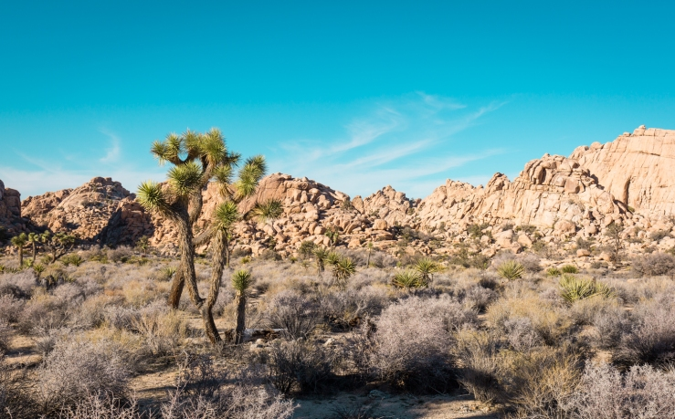 HiddenValley_JoshuaTree_4.jpg